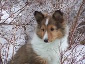 puppy746546