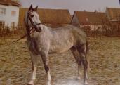 Moco in 1976