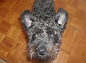 my cute dog