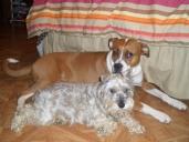 Daisy & Raggy