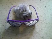 My hamster Alvin