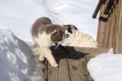 Gus & Max (RIP)